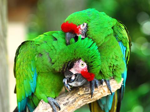 Avian Nutrition