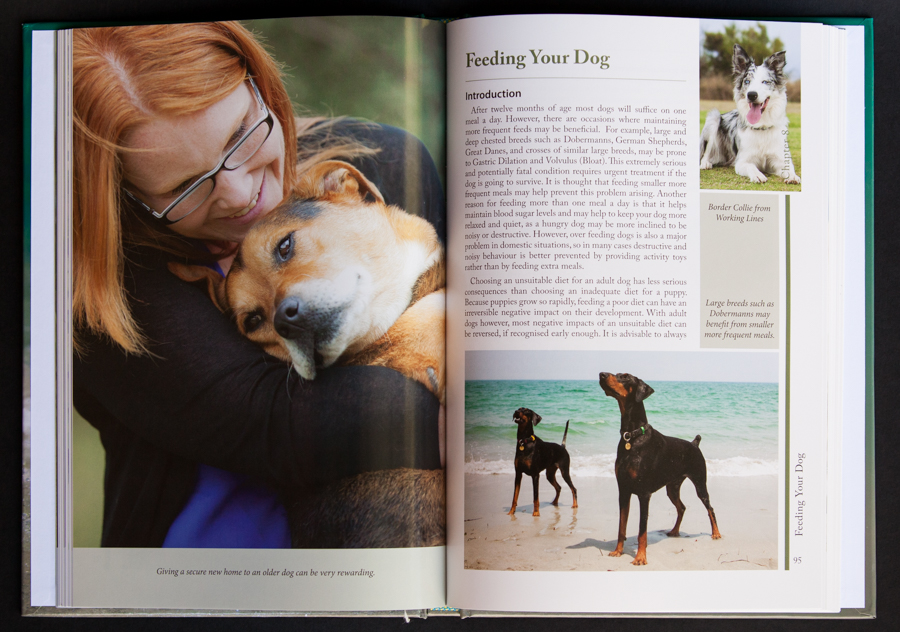 Getting to Know Dogs by Diana Andersen