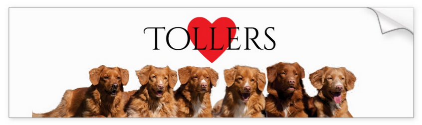 Nova Scotia Duck Tolling Retriever Bumper Sticker