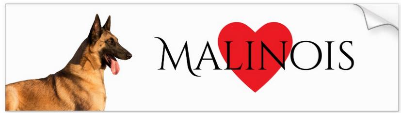 Malinois Bumper Sticker