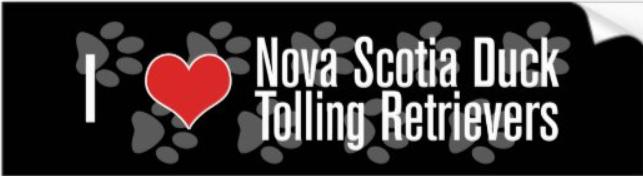 Nova scotia duck tolling retriever bumper sticker