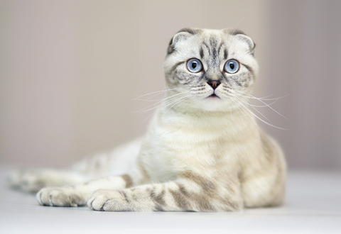 Jenis Jenis Kucing Momo Cat House Boyolali