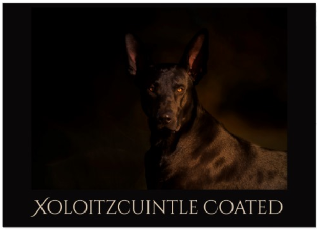 coated xoloitzcuintli card