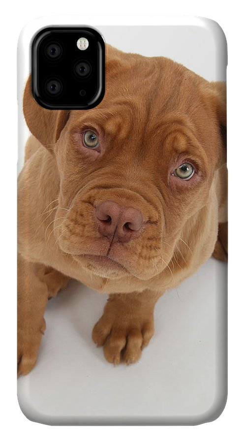 Dogue de Bordeaux phone case by Mark Taylor