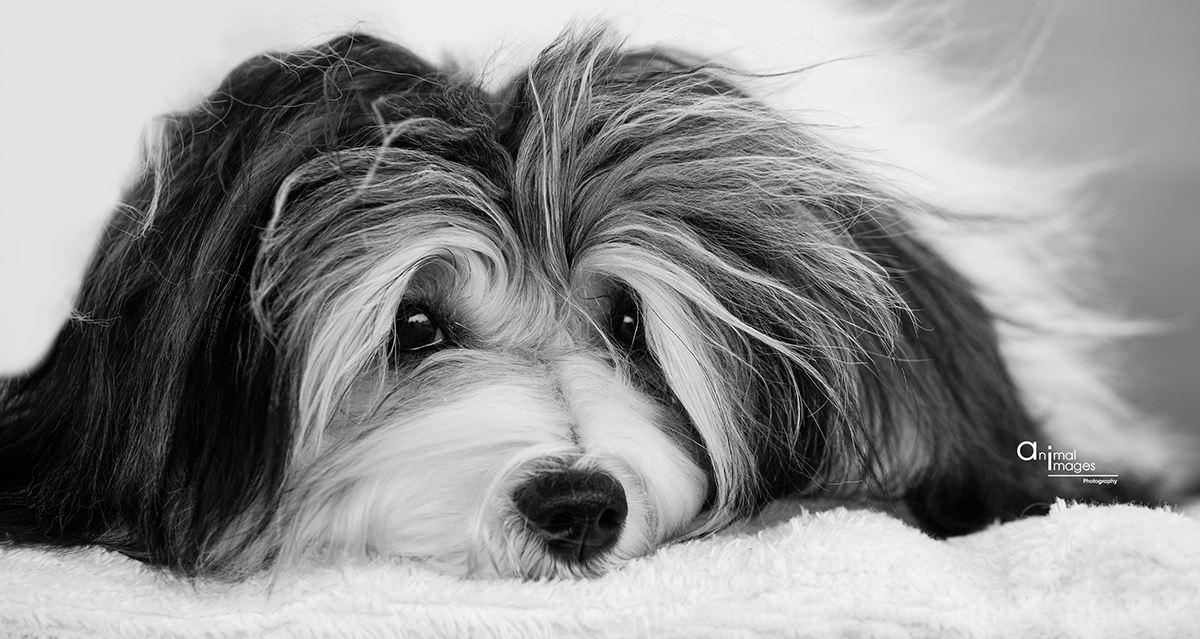 Dog Groomer's Directory