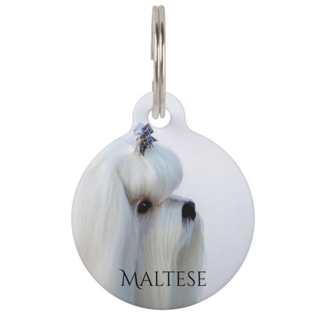 Maltese dog id tag