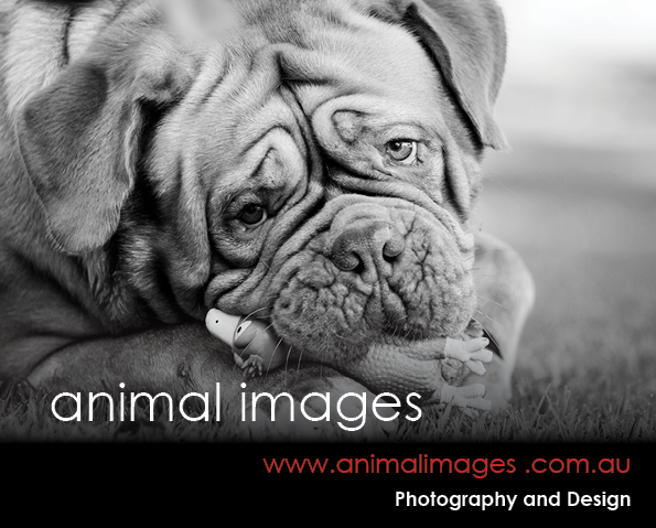 Animal Images Photography & Design