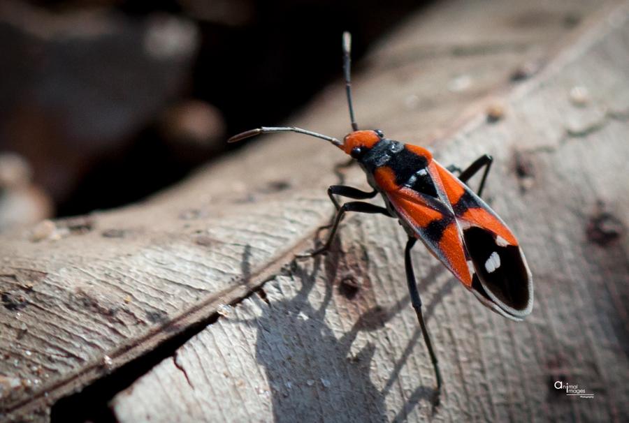 Entomology Art