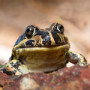 Reptile & Amphibian Keeping Information, Products and Resources