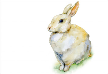 Rabbit watercolour - istock.com
