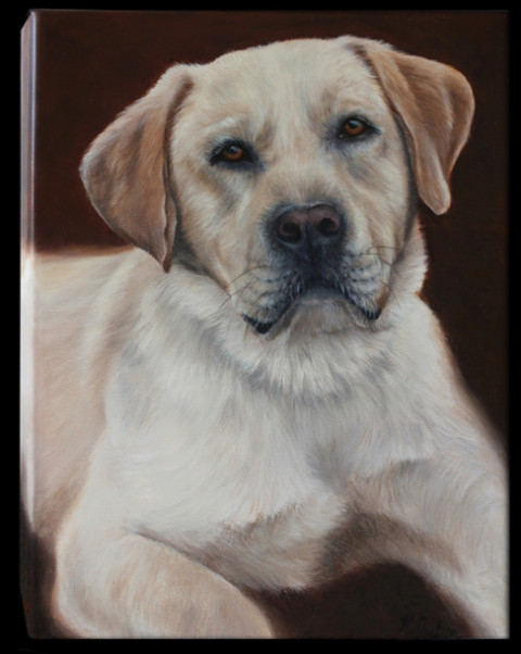 """Zeus"" the golden labrador. Oils on Canvas, 12x16in."