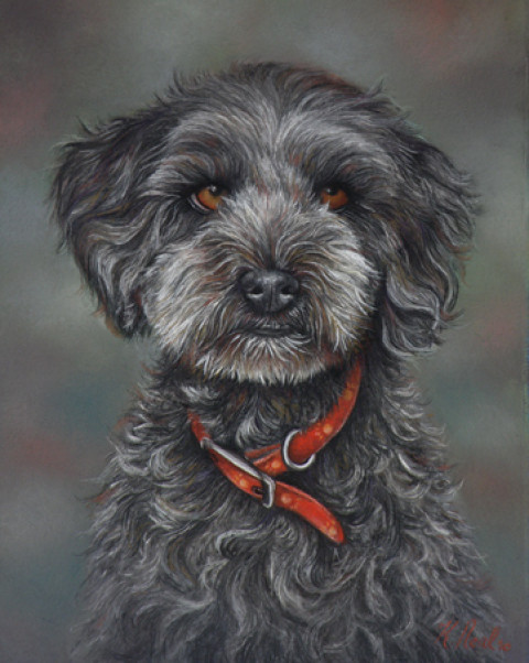 """Coco"" the Tibetan Terrier/Poodle cross, pastel 420x300mm."