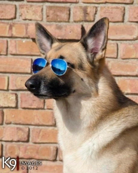 RIN TIN TIN sporting his sunglasses, JSD style