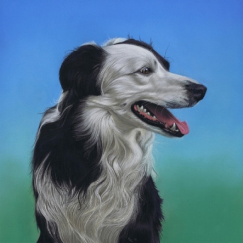 Pet Portraits