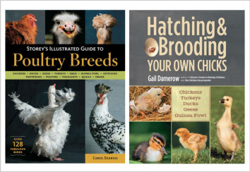 Poultry ebooks