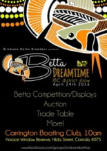 BBB Betta Dreamtime Betta Show