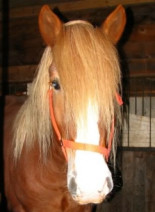 New England Equine Rescues (NEER)