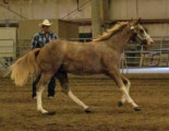 Carefree Horses - Horse Training & Sales from Joe Estrada