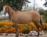 Quality Quarter Horses from T Bar S Ranch
