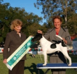 Pamela Campbell - Licenced All Breeds Judge