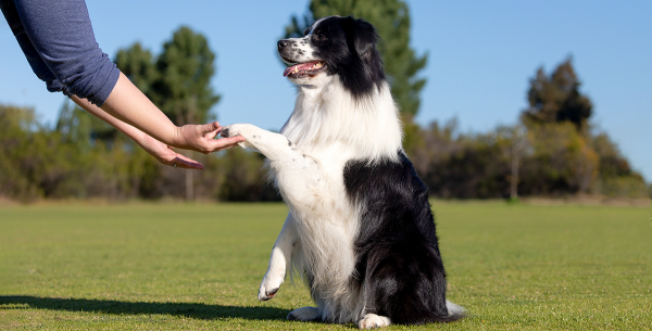 How Clicker Trainers Correct Behavior