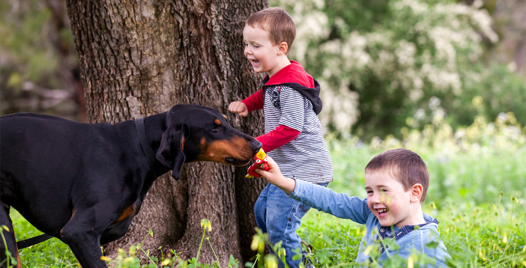 Your Doberman Puppy Can Be A Family Pet And Protector
