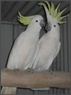 Cockatoos and Parrots from Rosewood Bird Gardens