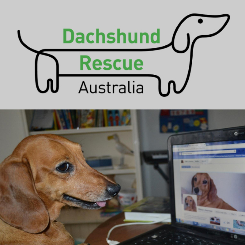 Dachshund Rescue & Rehoming