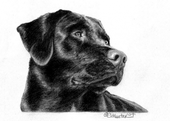 Hand Drawn Pet Portraits by Schlueter Art Works