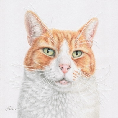Capture your pets unique personality with a portrait by Jewel Mathieson