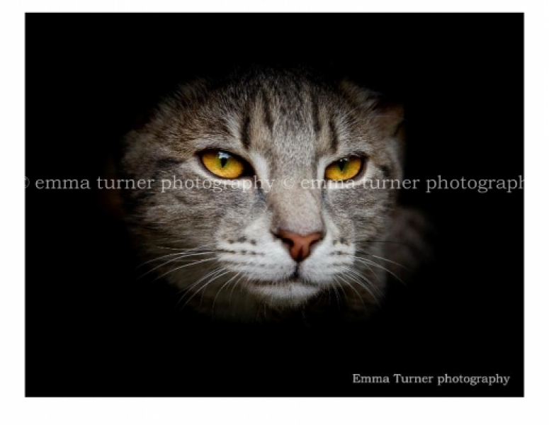 Cat photographer-Melbourne-Emma Turner photography