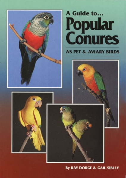 A Guide to Popular Conures as Pet and Aviary Birds