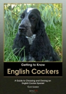 Getting to Know English Cockers: A Guide to Choosing and Owning an English Cocker Spaniel