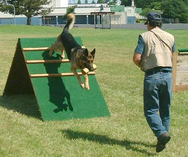 Dog Training and Sports